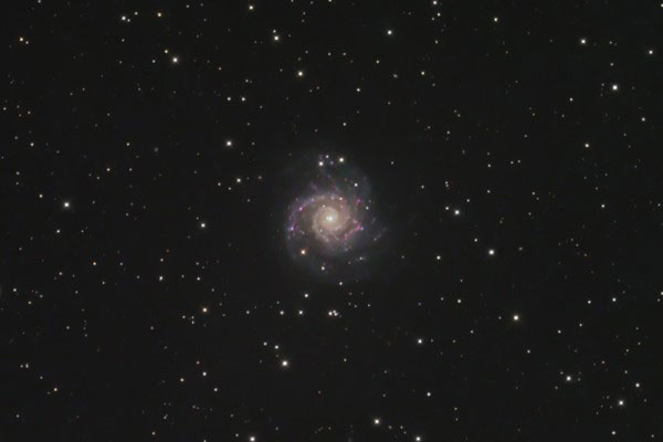 Galaxy M-74 in Pisces